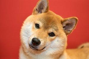 犬の嘔吐4 | Fanimal(ファニマル)