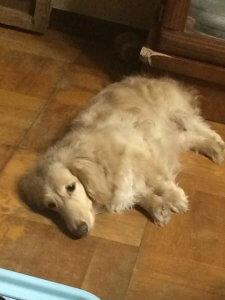 犬の発熱2 | Fanimal(ファニマル)