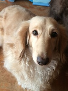 犬の発熱1 | Fanimal(ファニマル)