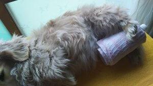 犬の発熱6 | Fanimal(ファニマル)