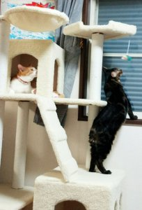 キャットタワーで遊んでいる | Fanimal(ファニマル)