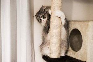 捨て猫2 | Fanimal(ファニマル)