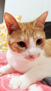 猫よけにペットボトル4 | Fanimal(ファニマル)