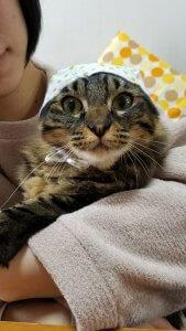 猫よけにペットボトル3 | Fanimal(ファニマル)