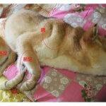 【治療編】愛犬が床ずれに!老犬介護に助かる手当のコツ