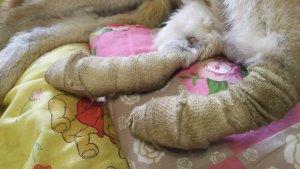 tratamento cães com cadeira de rodas