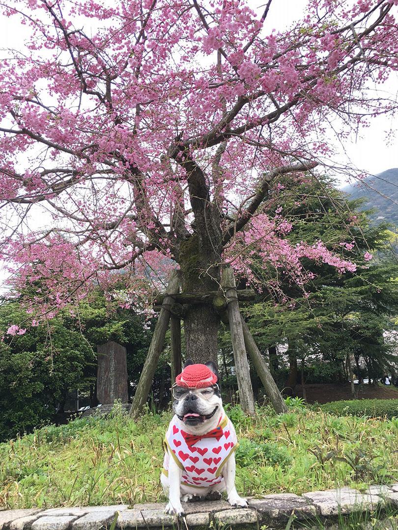 春🌸を想う。ー幸せもたらすショコラと私のフォト日記 Vol.3 | Fanimal(ファニマル)