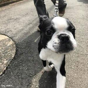犬と暮らすということvol2-2 | Fanimal(ファニマル)
