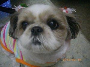 犬のアレルギー1 | Fanimal(ファニマル)