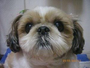 犬のアレルギー5 | Fanimal(ファニマル)