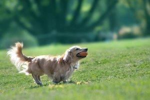 犬のヘルニア2 | Fanimal(ファニマル)