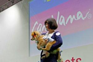 保護犬のファッションショー4 | Fanimal(ファニマル)