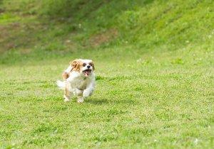 犬の足の異常から考えられる病気4 | Fanimal(ファニマル)