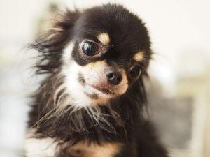 犬の足の異常から考えられる病気2 | Fanimal(ファニマル)