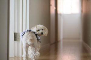犬の足の異常から考えられる病気3 | Fanimal(ファニマル)