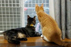 猫の脱走1 | Fanimal(ファニマル)