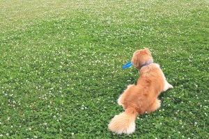 なぜ保護犬だったのか?1 | Fanimal(ファニマル)