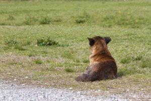 なぜ保護犬だったのか?2 | Fanimal(ファニマル)