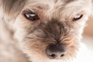 なぜ保護犬だったのか?3 | Fanimal(ファニマル)