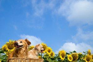 なぜ保護犬だったのか?4 | Fanimal(ファニマル)