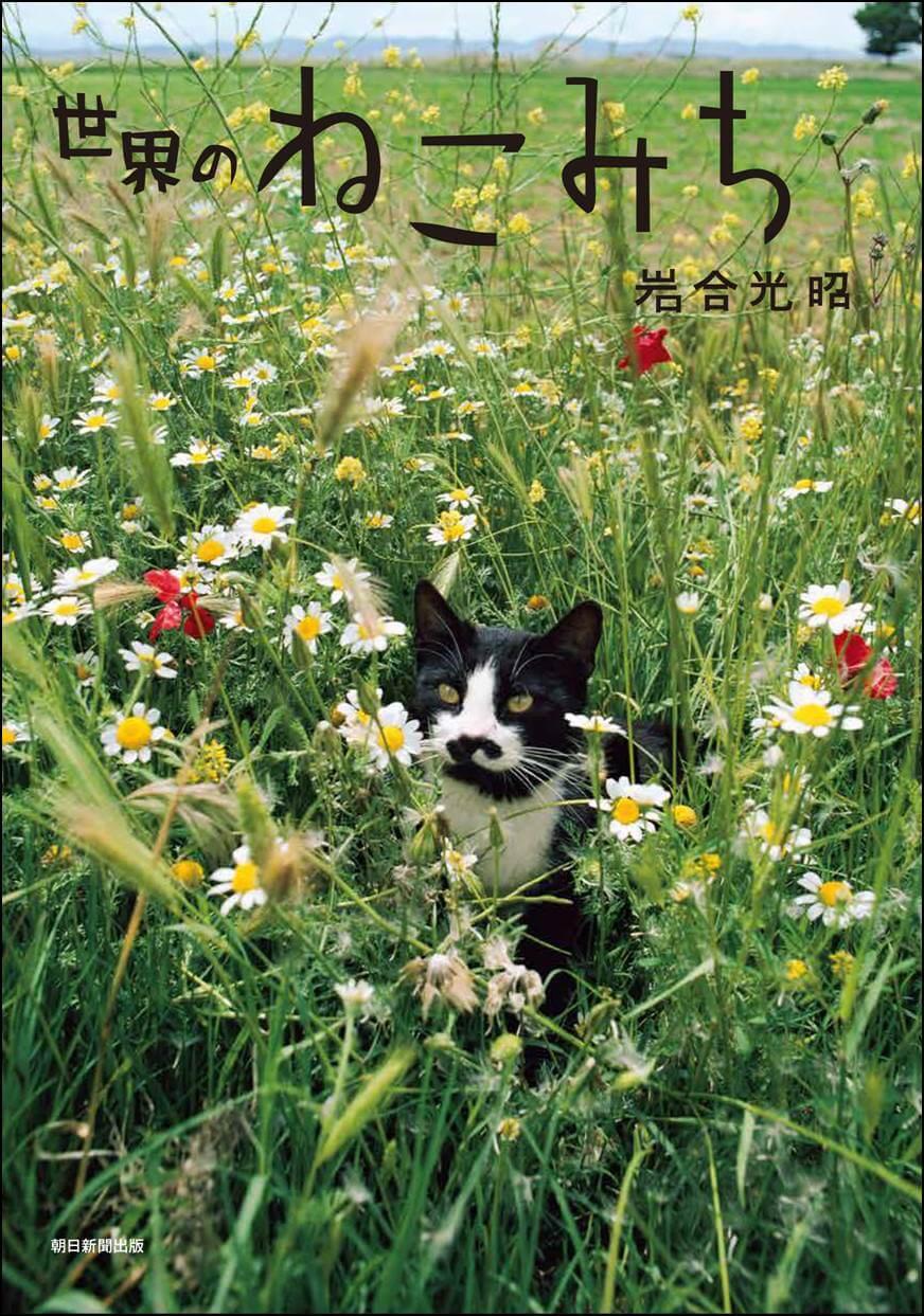 ネコを探して、また旅を。岩合光昭さんの猫フォトエッセイ『世界のねこみち』発売! | Fanimal(ファニマル)