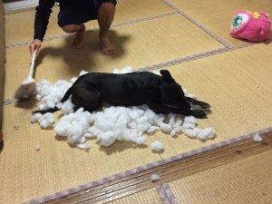 保護犬との出会い③2 | Fanimal(ファニマル)