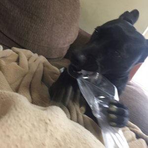 保護犬との出会い④1 | Fanimal(ファニマル)