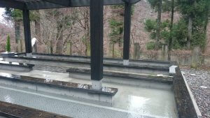 那須の森のサルーキ愛寿の乳がん回復温泉セラピー2 | Fanimal(ファニマル)
