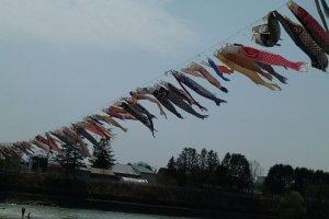 十勝に暮らす3兄弟の徒然日記14 | Fanimal(ファニマル)