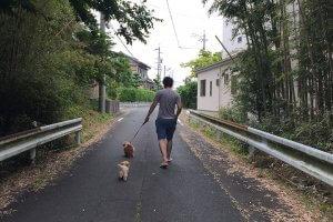 愛犬と四季を感じて楽しむお散歩の方法2 | Fanimal(ファニマル)