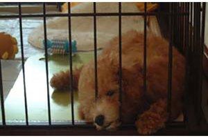 犬の糖尿病闘病記1 | Fanimal(ファニマル)