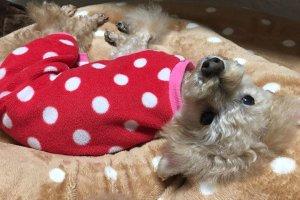 犬の糖尿病闘病記3 | Fanimal(ファニマル)