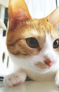 猫の首筋をつまむとおとなしくなる大事な理由2 | Fanimal(ファニマル)