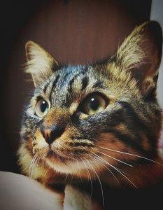 猫の首筋をつまむとおとなしくなる大事な理由1 | Fanimal(ファニマル)
