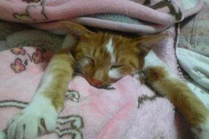 猫伝染性貧血2 | Fanimal(ファニマル)