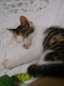 猫伝染性貧血3 | Fanimal(ファニマル)