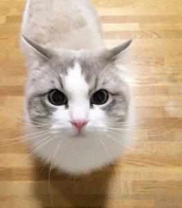 猫の肥大型心筋症3 | Fanimal(ファニマル)