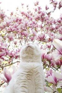 猫の肥大型心筋症5 | Fanimal(ファニマル)
