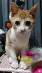 猫の多頭飼い①1 | Fanimal(ファニマル)