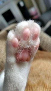 猫の多頭飼い①2 | Fanimal(ファニマル)