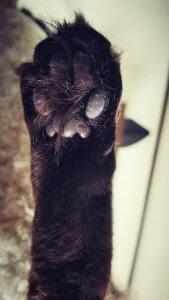 猫の多頭飼い①3 | Fanimal(ファニマル)