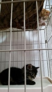 猫の多頭飼い②2 | Fanimal(ファニマル)
