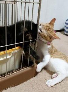 猫の多頭飼い②3 | Fanimal(ファニマル)