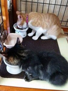 猫の多頭飼い②4 | Fanimal(ファニマル)