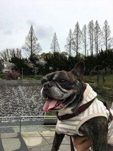 おっとり茉菜との桜満開靭公園13 | Fanimal(ファニマル)