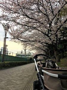 おっとり茉菜との桜満開靭公園3 | Fanimal(ファニマル)
