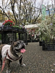 おっとり茉菜との桜満開靭公園5 | Fanimal(ファニマル)