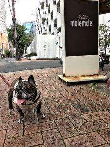 おっとり茉菜との桜満開靭公園10 | Fanimal(ファニマル)