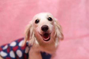 犬の白内障を知ろう2| Fanimal(ファニマル)