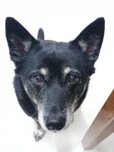 犬とハーブで幸せ暮らしVol.2-2 | Fanimal(ファニマル)